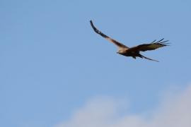 [MTAC - Câu chuyện truyền cảm hứng] Cuộc tái sinh của Đại bàng: Ai cũng có một bầu trời, bạn chỉ cần can đảm thay đổi để cất cánh bay!