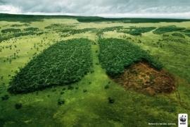Muốn sống khỏe trong môi trường sạch, hãy làm những việc này