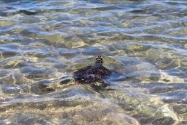 Nhiều loài thủy sản quý, hiếm có nguy cơ bị đe dọa tuyệt chủng